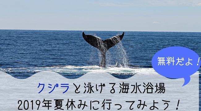 クジラと泳げる海水浴場 2019年夏休みに行ってみよう!